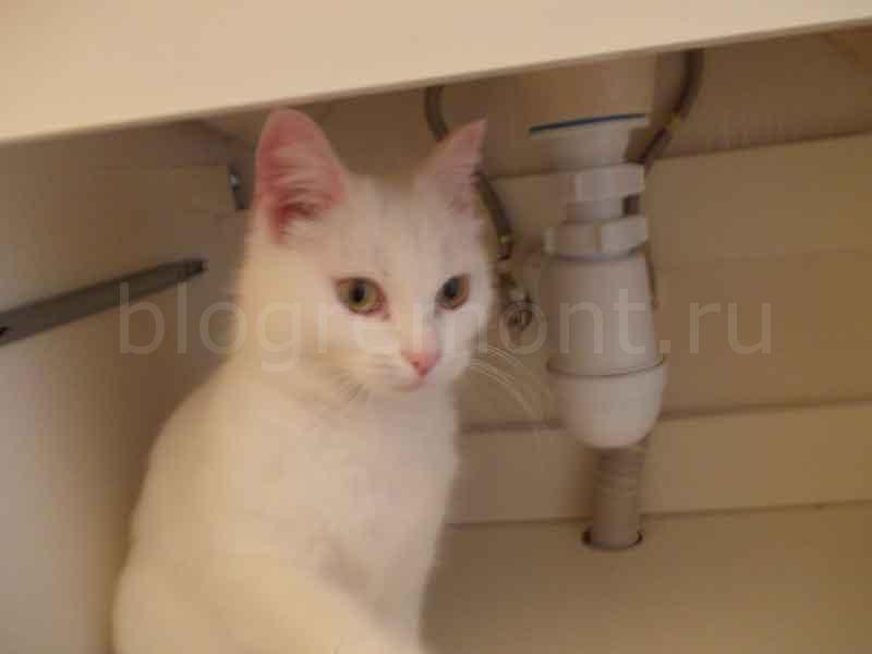кошка в подвесной тумбе