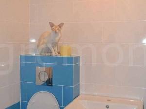 кот над инсталляцией